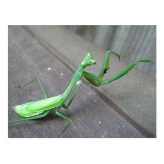 Grasshopper/Praying Mantis Postcard