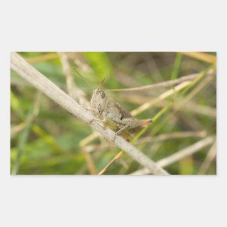 Grasshopper Rectangular Sticker
