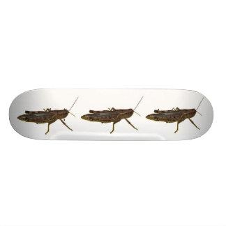 Grasshopper Skateboard