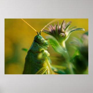 Grasshopper Wall Poster