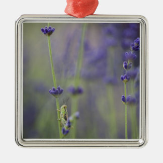 Grasshopper with lavender christmas ornament