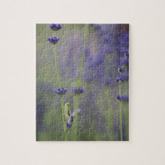 Grasshopper with lavender jigsaw puzzle