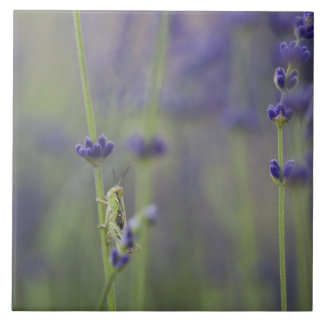 Grasshopper with lavender tile