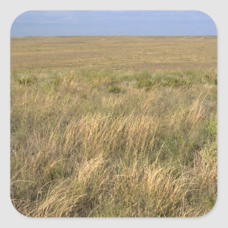 Grassland prairie east of Sidney, Nebraska. Square Sticker