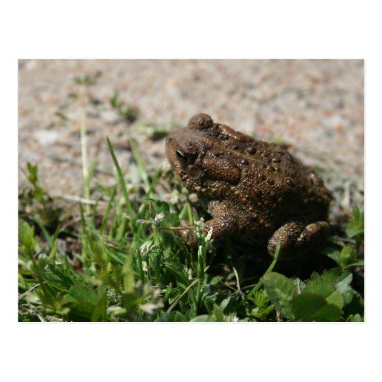 Grassy Frog Postcard