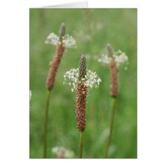 Grassy Gems Card