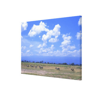 Grassy Plain Stretched Canvas Prints