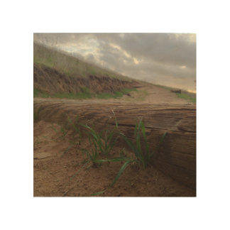 Grassy Steps Wood Canvas
