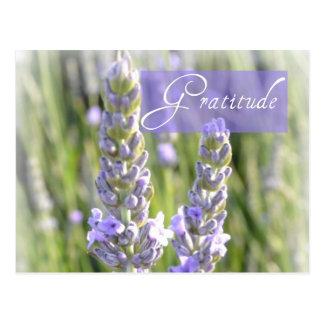 Gratitude Lavender Floral Post Card