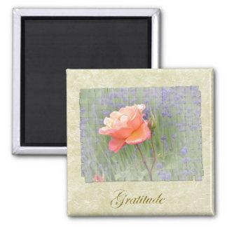 Gratitude Rose with Lavender Square Magnet