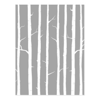 Gray and White Birch Tree Postcard