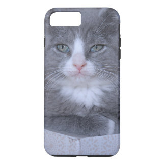 GRAY AND WHITE KITTEN IPHONE CASE