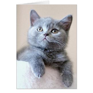 Gray British Shorthair Cat Greeting Card