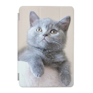 Gray British Shorthair Cat iPad Mini Cover