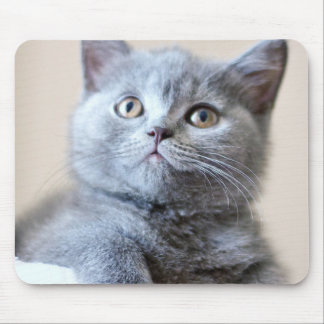 Gray British Shorthair Cat Mouse Mat