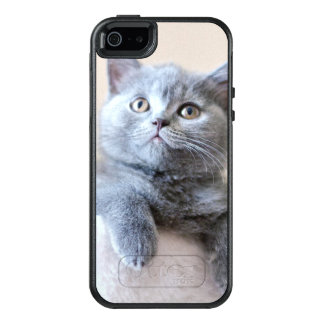 Gray British Shorthair Cat OtterBox iPhone 5/5s/SE Case