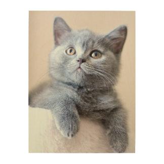 Gray British Shorthair Cat Wood Wall Art