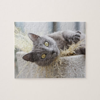 Gray Cat Lying in Pot, Olargues, Herault, France Jigsaw Puzzle