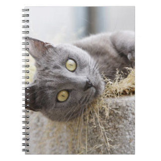 Gray Cat Lying in Pot, Olargues, Herault, France Notebooks