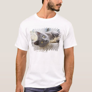 Gray Cat Lying in Pot, Olargues, Herault, France T-Shirt