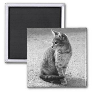 Gray Cat Magnet