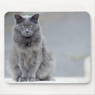 Gray Cat Mousepad