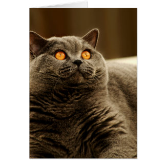 Gray Cat Note Card