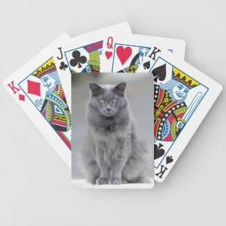 Gray Cat on Cards Bicycle Playing Cards
