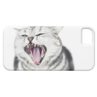 gray cat on white background case for the iPhone 5