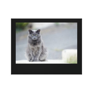 """Gray Cat on White Wall, 14"""" x 11"""", 1.5"""", Single Gallery Wrap Canvas"""