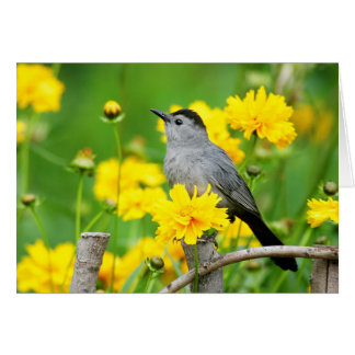 Gray Catbird on wooden fence Card