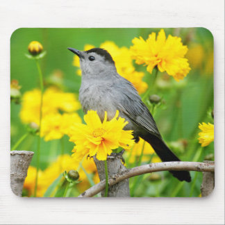 Gray Catbird on wooden fence Mouse Mat