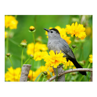 Gray Catbird on wooden fence Postcard