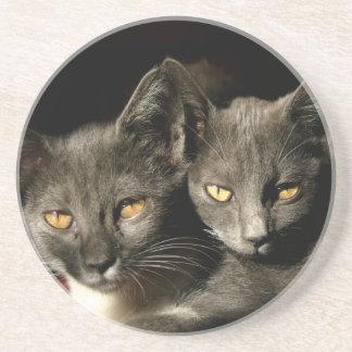 Gray cats Photo Coaster