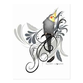 Gray Cockatiel Postcard