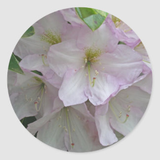 Gray Day and Pale Pink Rhododendron Flowers Round Sticker