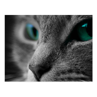 Gray Fur Cat Face with Beautiful Green Eyes Postcard