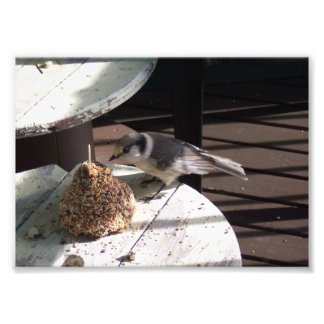 Gray Jay and Bell Photo Print
