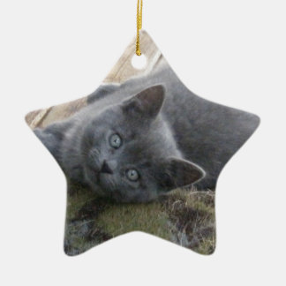 Gray Kitten Ceramic Star Decoration