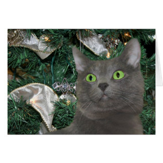 Gray kitty Christmas Greeting Card
