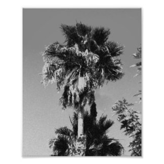 Gray Palm Tree Art Photo