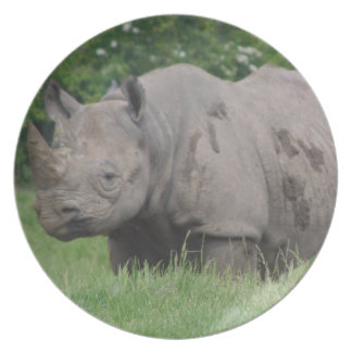 Gray Rhino in a field Plate