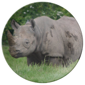 Gray Rhino in the wild Plate