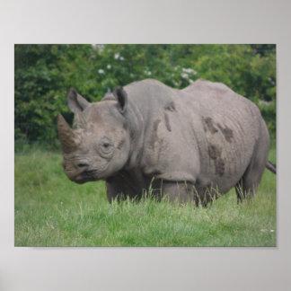 Gray Rhino Poster
