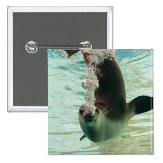 Gray Seal Diving underwater bubbles from nose 15 Cm Square Badge