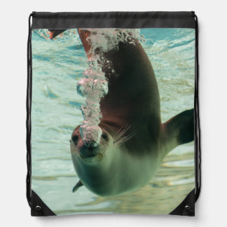 Gray Seal Diving underwater bubbles from nose Rucksacks
