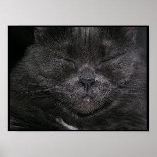 Gray Sleepy Cat Poster