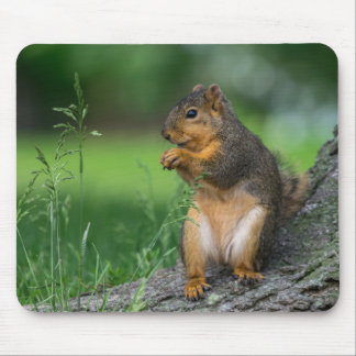 GRAY SQUIRREL by Michelle Diehl Mouse Pad