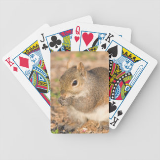 Gray Squirrel eating seeds Bicycle Playing Cards