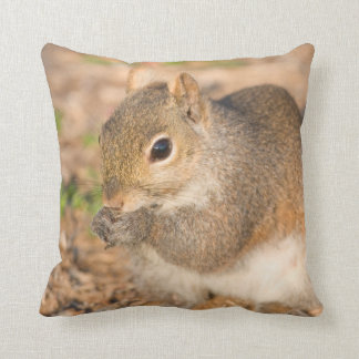 Gray Squirrel eating seeds Cushion